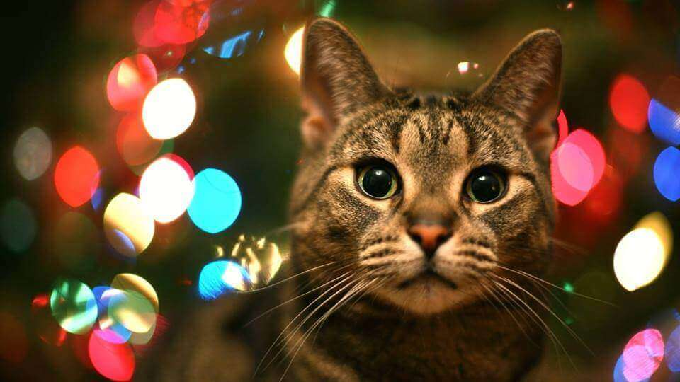christmas-fayre-cats-protection-centre-isle of wight